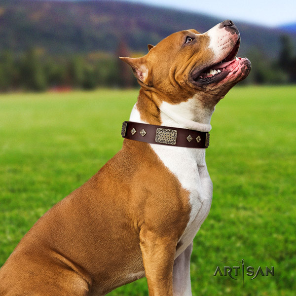 Amstaff trendy genuine leather dog collar with embellishments for everyday walking