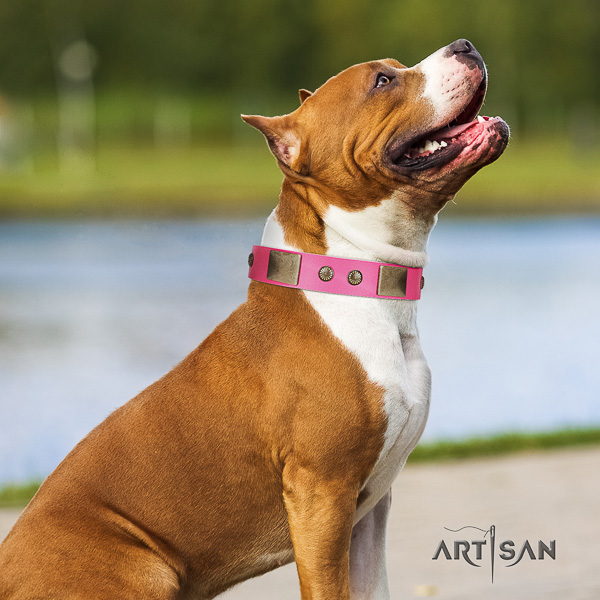 Amstaff handcrafted full grain leather dog collar for basic training