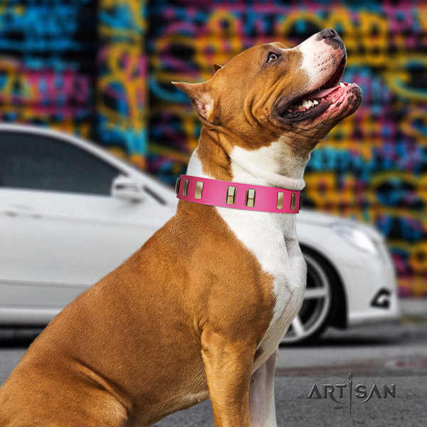 Amstaff designer leather dog collar for everyday use