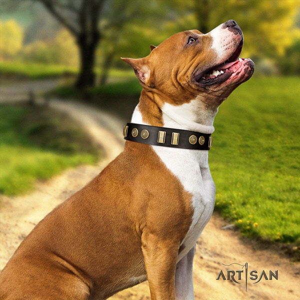 Amstaff trendy genuine leather dog collar with adornments for basic training