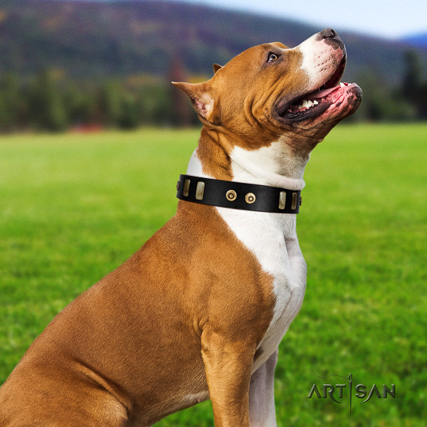Amstaff remarkable full grain genuine leather dog collar for everyday use
