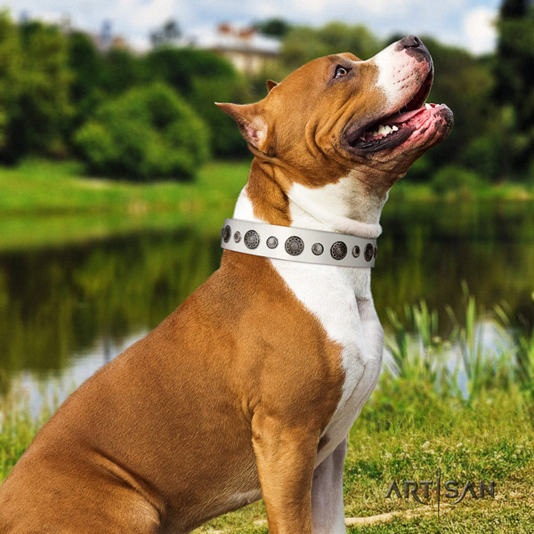 Amstaff unusual genuine leather dog collar with decorations for daily use