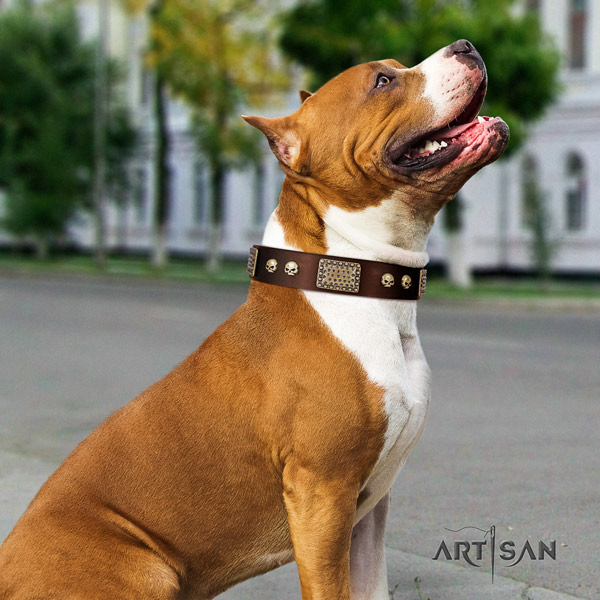 Amstaff exquisite full grain leather dog collar with adornments for comfortable wearing