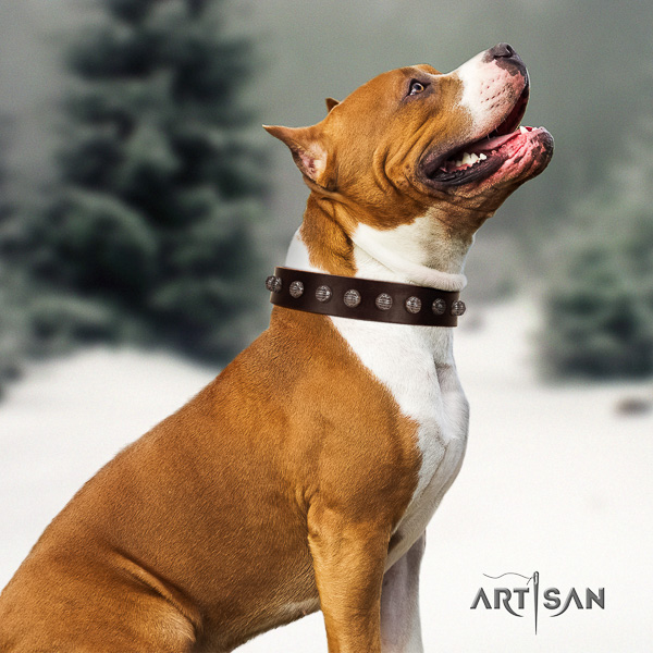 Amstaff adorned full grain leather dog collar for everyday walking