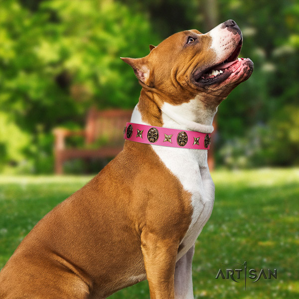 Amstaff exceptional full grain natural leather dog collar for daily walking