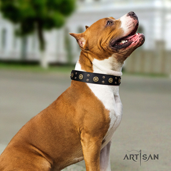 Amstaff awesome full grain leather dog collar with decorations for easy wearing