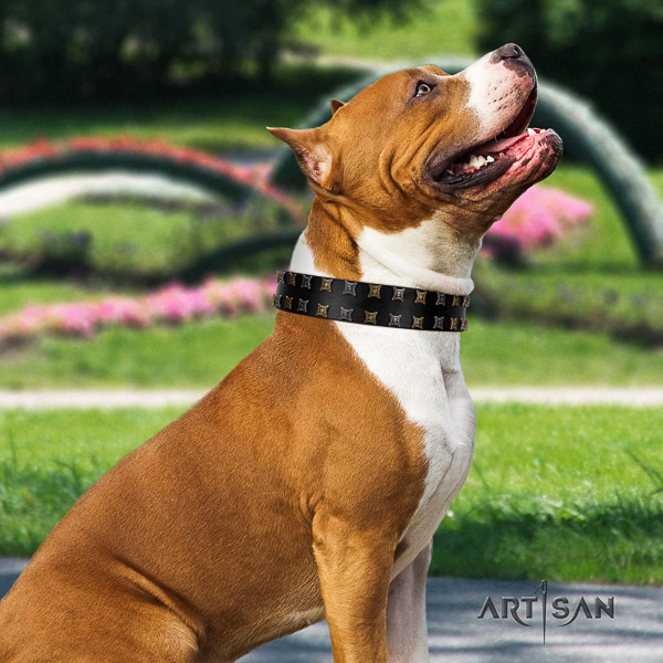 Amstaff amazing full grain leather dog collar for daily walking