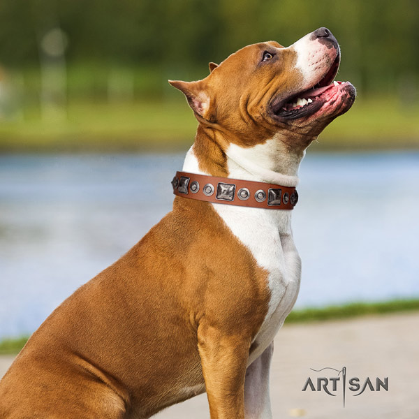 Amstaff exquisite leather dog collar with studs for stylish walking