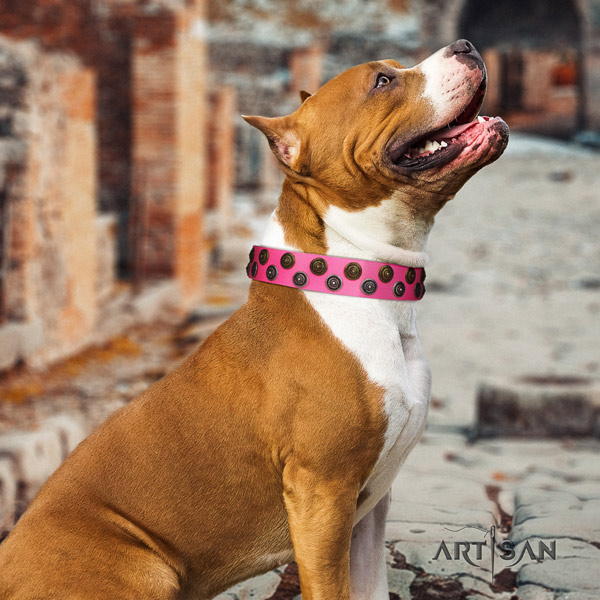 Amstaff trendy genuine leather dog collar with decorations for stylish walking