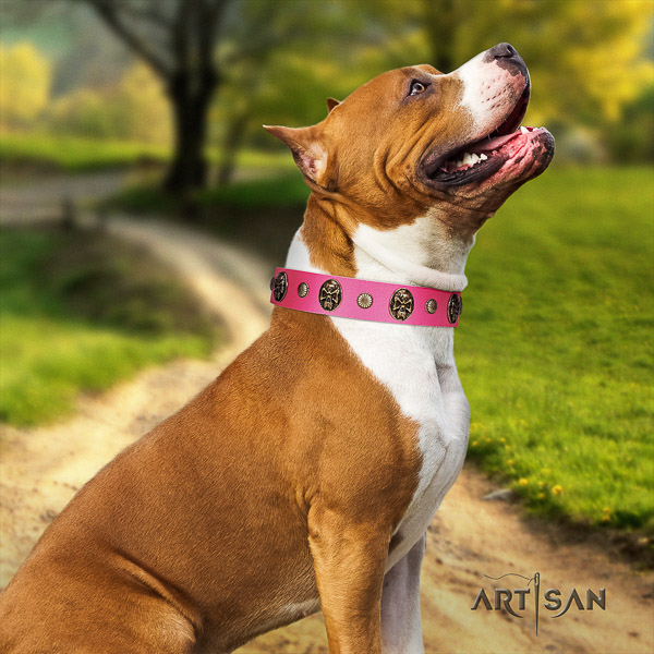 Amstaff stunning genuine leather dog collar for handy use