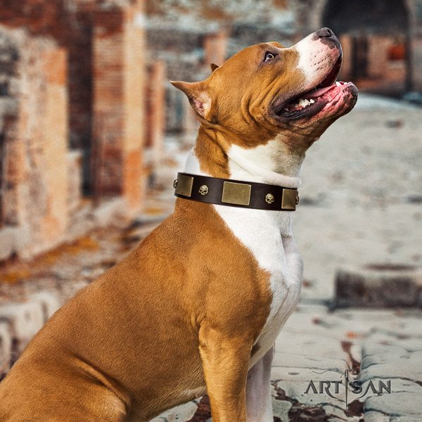 Amstaff extraordinary full grain leather dog collar for daily use