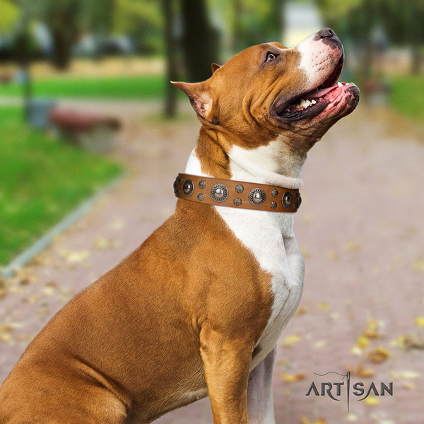 Amstaff stylish design genuine leather dog collar with decorations for easy wearing