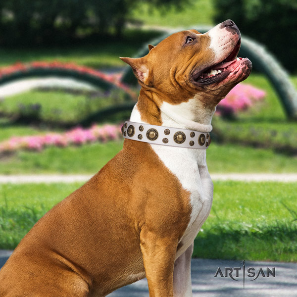 Amstaff stunning leather dog collar with embellishments for everyday walking