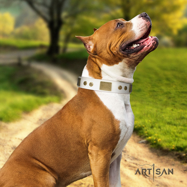 Amstaff exquisite genuine leather dog collar with decorations for comfortable wearing