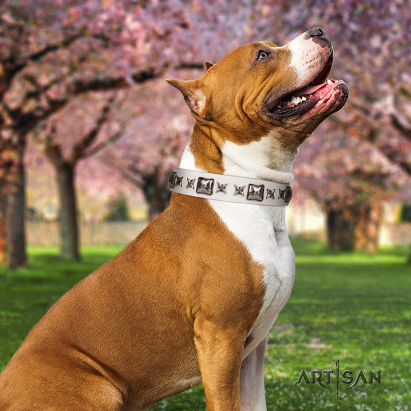 Amstaff unusual full grain leather dog collar with studs for daily walking