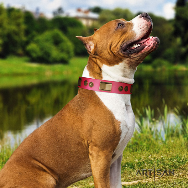 Amstaff awesome genuine leather dog collar with embellishments for stylish walking