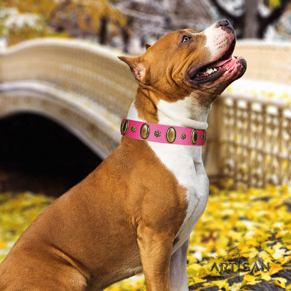 Amstaff decorated full grain natural leather dog collar for comfy wearing