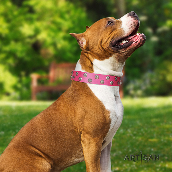 Amstaff impressive full grain leather dog collar for daily use