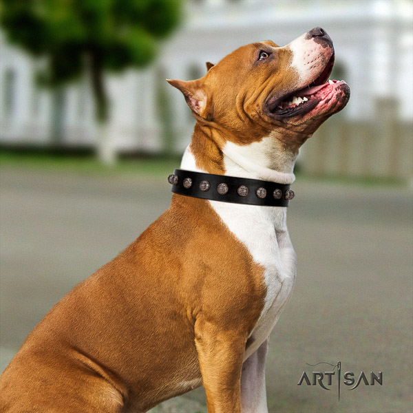 Amstaff adjustable full grain leather dog collar for basic training