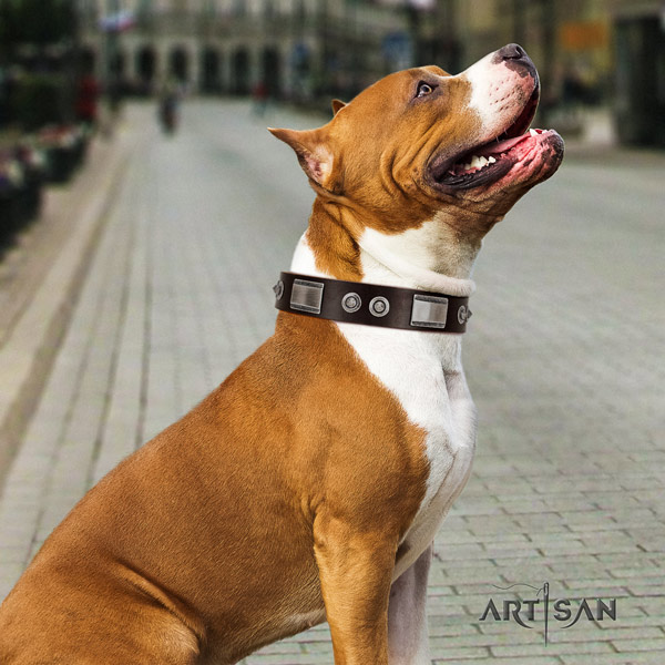 Amstaff amazing genuine leather dog collar with embellishments for basic training