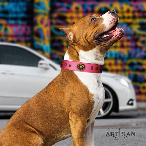 Amstaff stunning genuine leather dog collar with decorations for stylish walking