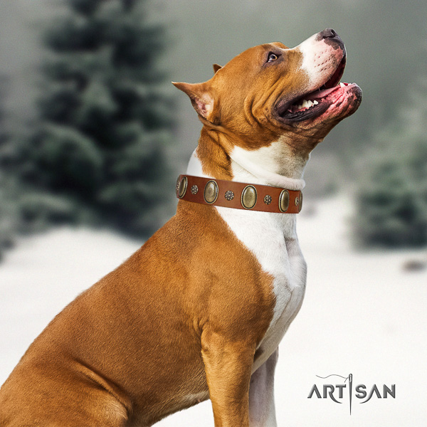 Amstaff easy adjustable leather dog collar for fancy walking