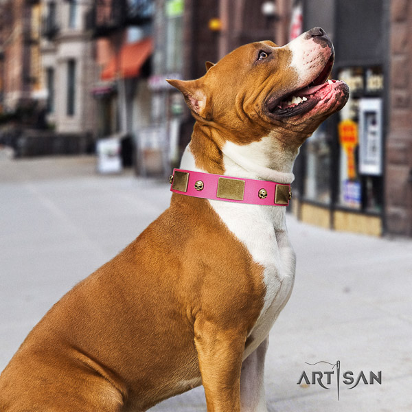 Amstaff adorned full grain leather dog collar for comfy wearing