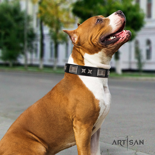 Amstaff stylish genuine leather dog collar with embellishments for comfy wearing