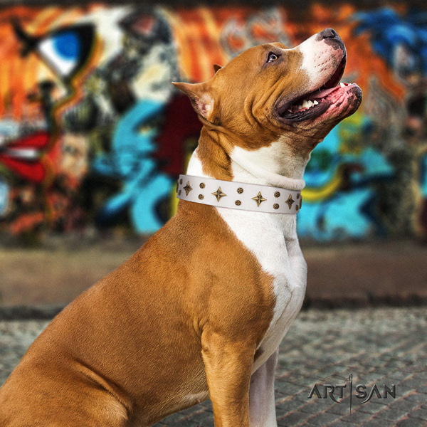 Amstaff exceptional leather dog collar with studs for easy wearing