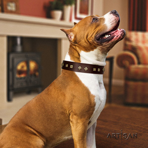 Amstaff significant leather dog collar with adornments for everyday walking