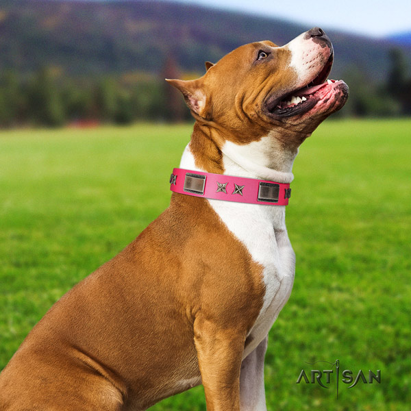 Amstaff fashionable genuine leather dog collar with decorations for stylish walking