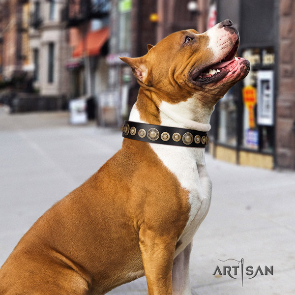 Amstaff unusual leather dog collar with studs for comfortable wearing