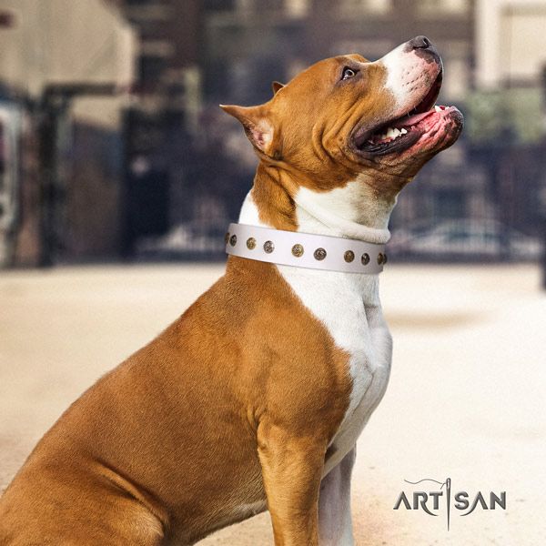 Amstaff stylish design leather dog collar with adornments for everyday walking