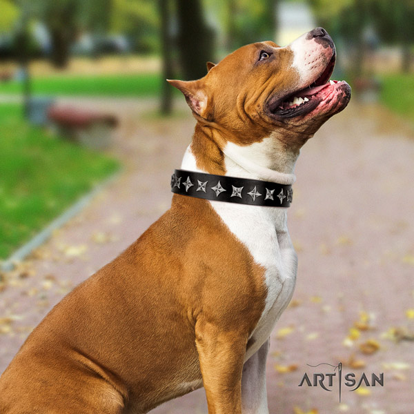 Amstaff fashionable genuine leather dog collar with embellishments for comfy wearing