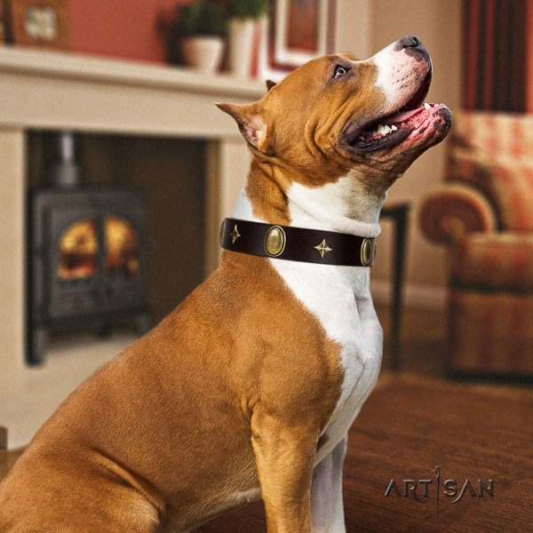 Amstaff stunning natural genuine leather dog collar for everyday use