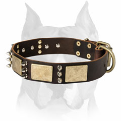 Perfect Amstaff breed dog collar with brass plates and nickel     spikes