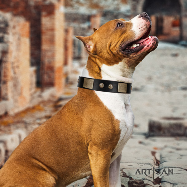 Amstaff best quality natural genuine leather dog collar for stylish walking