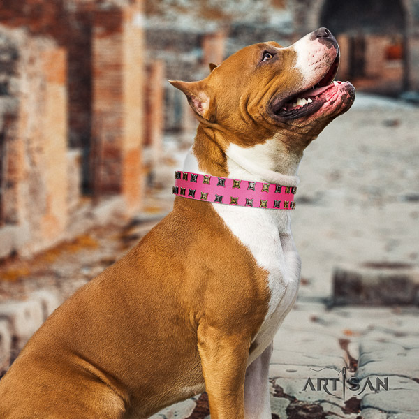 Amstaff inimitable full grain natural leather dog collar for comfortable wearing