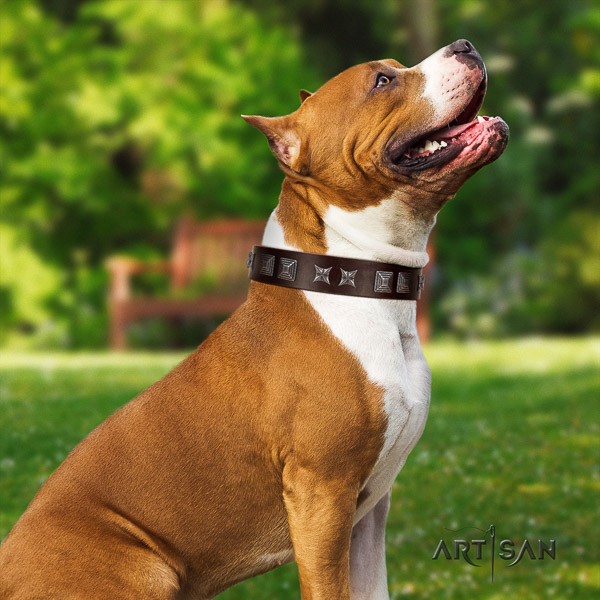 Amstaff trendy natural genuine leather dog collar for basic training