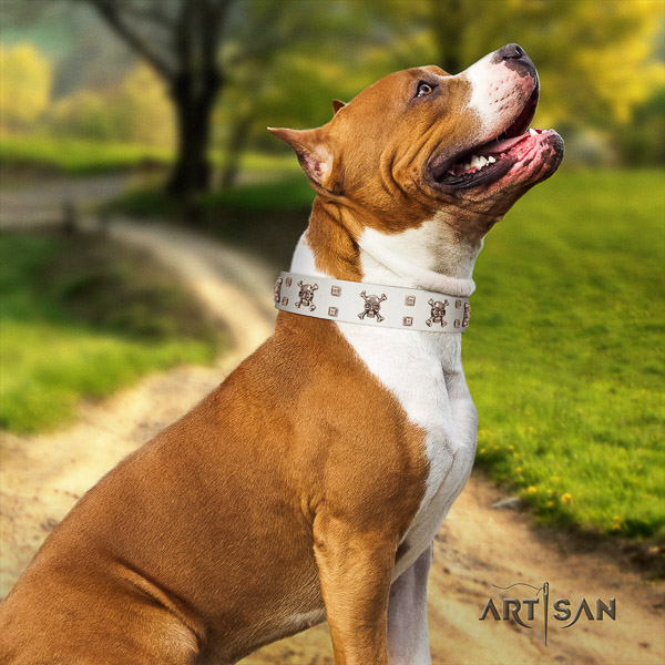 Amstaff extraordinary full grain natural leather dog collar for basic training