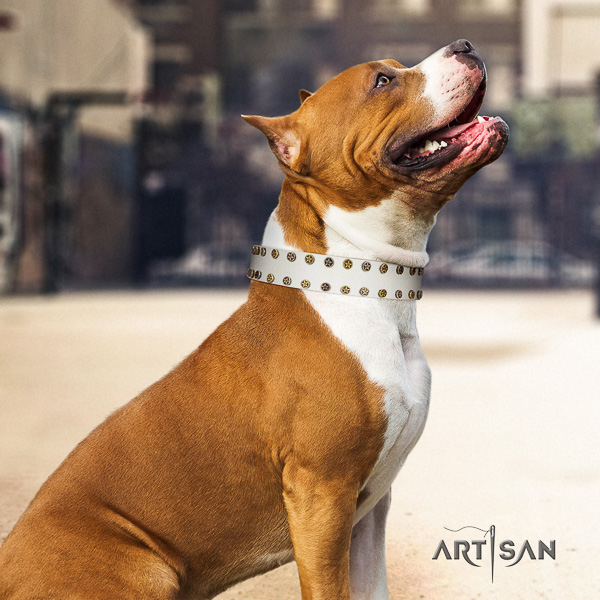Amstaff comfortable genuine leather dog collar for basic training