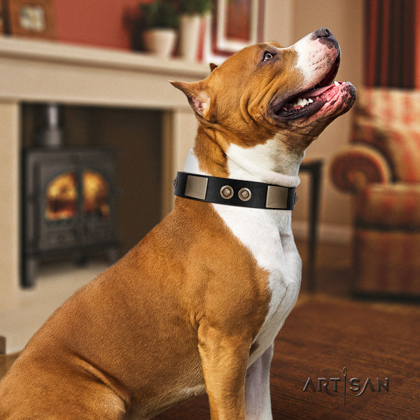 Amstaff adorned natural genuine leather dog collar for stylish walking