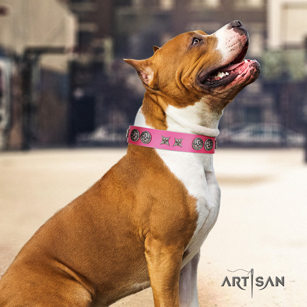 Amstaff perfect fit natural genuine leather dog collar for fancy walking