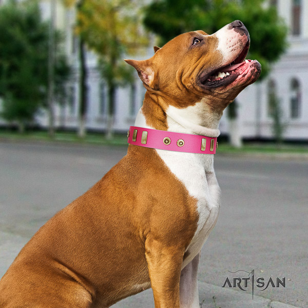 Amstaff handmade full grain leather dog collar for daily use
