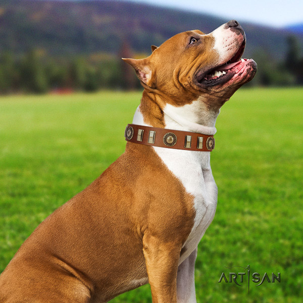 Amstaff inimitable full grain genuine leather dog collar for daily use