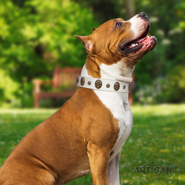Amstaff comfortable full grain natural leather dog collar for comfortable wearing