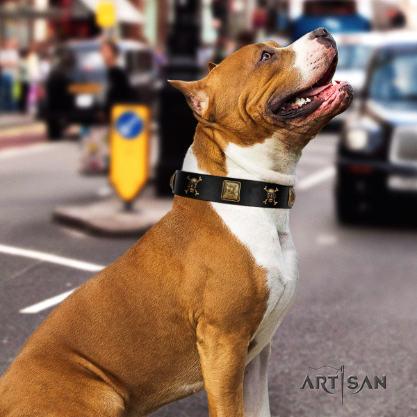 Amstaff easy wearing genuine leather dog collar for everyday walking