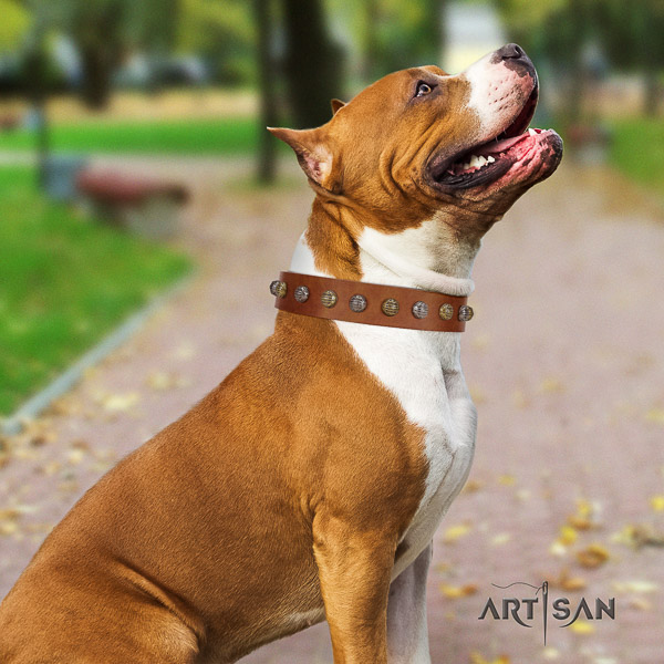 Amstaff easy wearing genuine leather dog collar for fancy walking