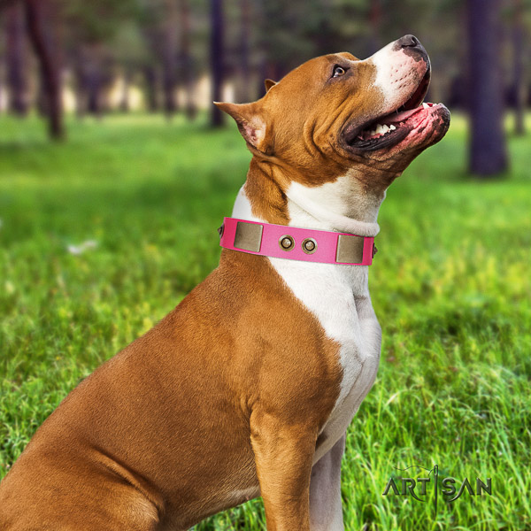Amstaff top quality genuine leather dog collar for everyday use