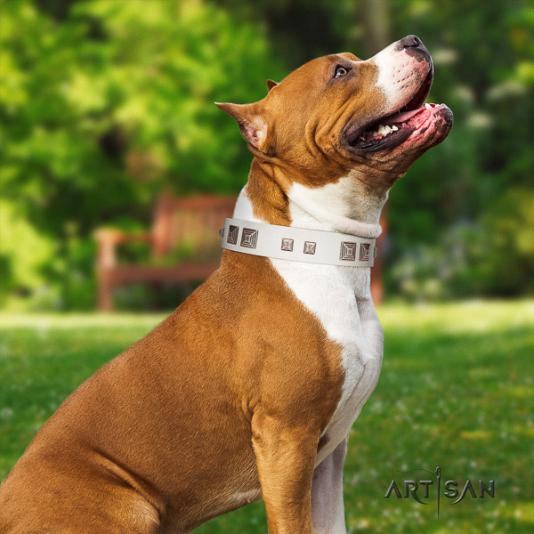 Amstaff incredible natural genuine leather dog collar for stylish walking